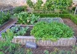 Keressük Kecskemét legszebb gyümölcsös, zöldséges konyhakertjét