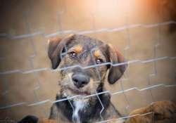 Segítségre van szüksége a Reno Kutyaotthonnak! Nélkülünk esélyük sincs, minden segítség jól jön a hontalan kutyusoknak