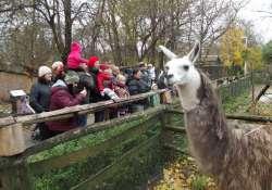 December 7-ig ingyenes az iskolásoknak a belépés a Vadaskertbe
