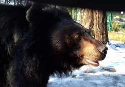 Vajon mit jósoltak a Kecskeméti Vadaskert medvéi?