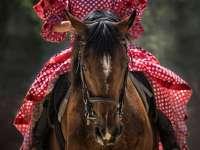 2016 Augusztusi lovasprogramok