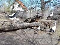 Felgyógyult állatokat enged útjára a Kecskeméti Vadaskert és a KNP
