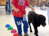 Iskola előkészítő fejlesztő foglalkozás indul terápiás kutyákkal, a kecskeméti Pillangó Fejlesztőkuckóban