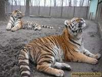 Felsőlajosi Állatkert MagánZoo