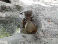 Makik és makákó, muflon és nílusi ludak születtek aKecskeméti Vadaskertben