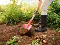 Most te is segíthetsz! Közeleg az Élet Napja! November 9-én ültess fát Kecskeméten!